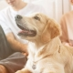 Descubre el seguro para perros